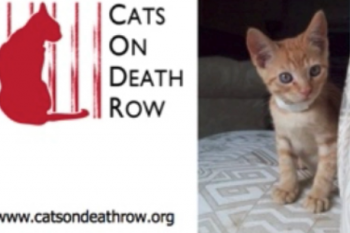 Cats on Death Row Video
