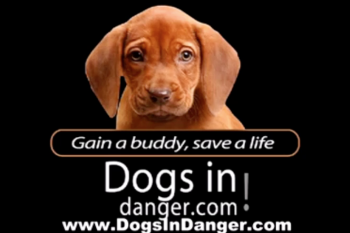 DogsInDanger Video